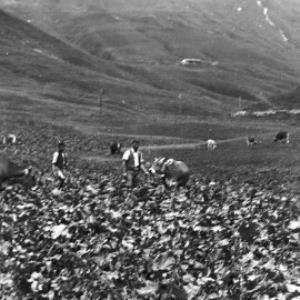 Alpe Körb, Schröcken von Anonym