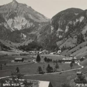 Reuthe Breg. Wald / Hiller von Hiller, ...