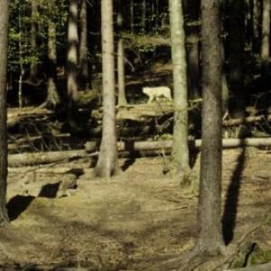 Feldkirch, Wildpark Ardetzenberg / Helmut Tiefenthaler von Tiefenthaler, Helmut