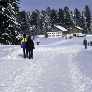 Sulzberg, Winterweg Brenner / Helmut Tiefenthaler von Tiefenthaler, Helmut