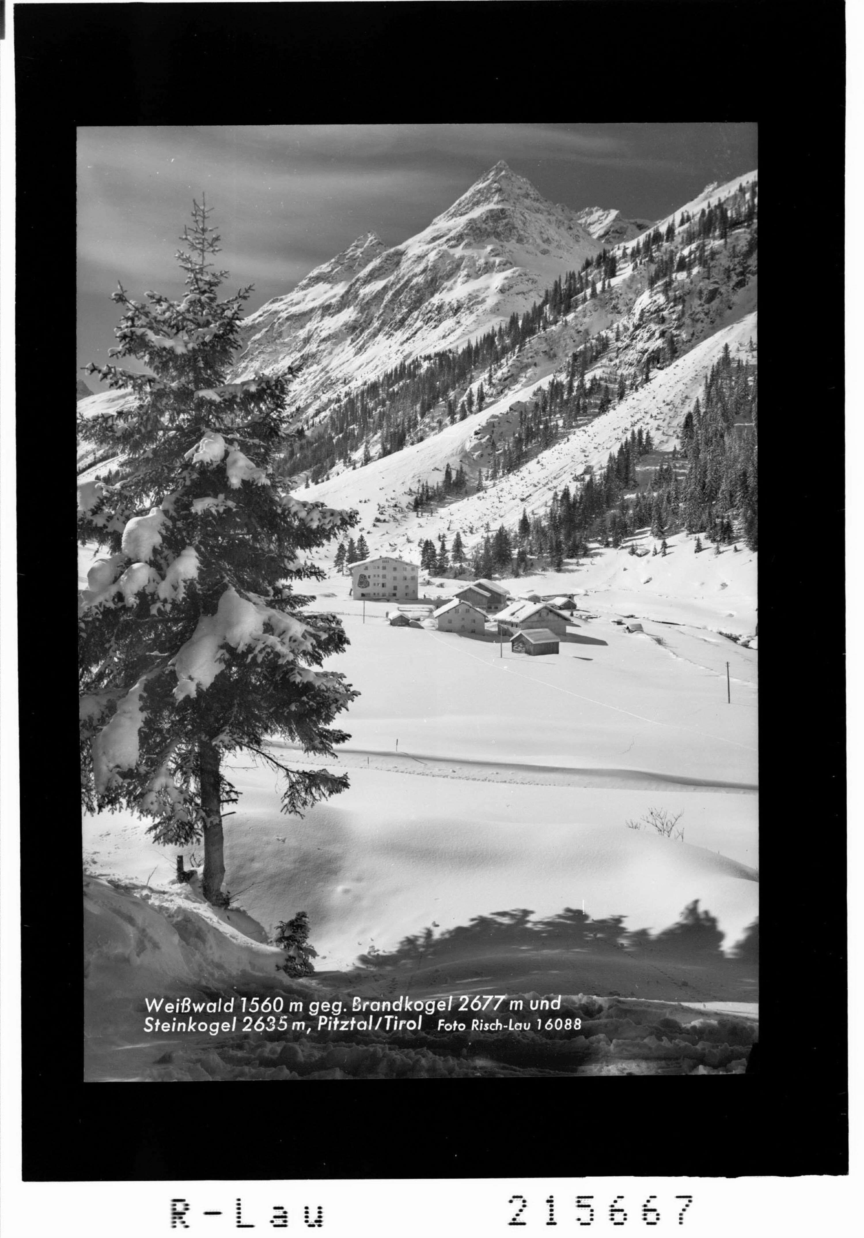 Weisswald 1560 gegen Brandkogel 2677 m und Steinkogel 2635 m, Pitztal / Tirol von Risch-Lau