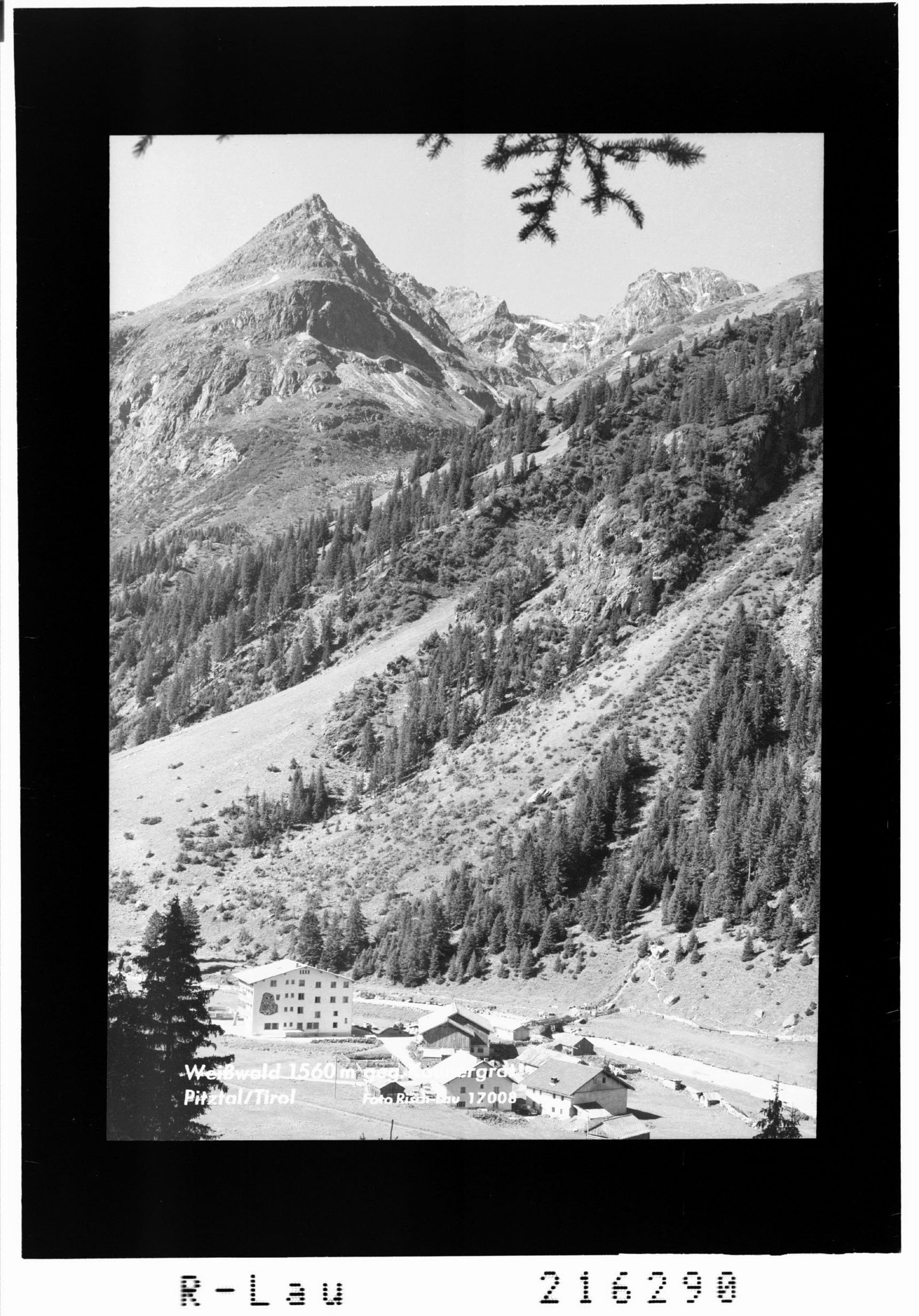 Weisswald 1560 m gegen Kaunergrat Pitztal / Tirol von Risch-Lau