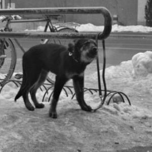 Vergessener Hund / Rudolf Zündel von Zündel, Rudolf