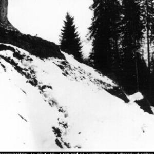 Bregenzerhaldelawine Sonntag / Sammlung: Wildbach- und Lawinenverbauung, Sektion Bludenz von Wildbach- und Lawinenverbauung