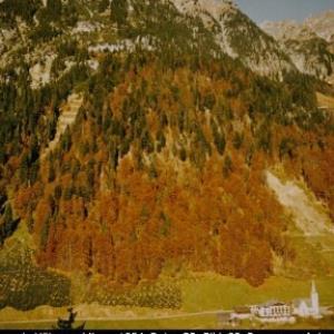 Blasenka Höhenwaldlawine Sonntag / Sammlung: Wildbach- und Lawinenverbauung, Sektion Bludenz von Wildbach- und Lawinenverbauung