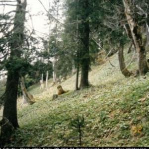 Schutzwälder Blons / Sammlung: Wildbach- und Lawinenverbauung, Sektion Bludenz von Wildbach- und Lawinenverbauung