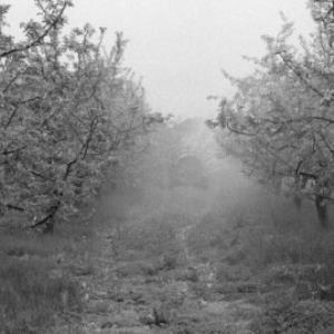 Obstbäume / Rudolf Zündel von Zündel, Rudolf