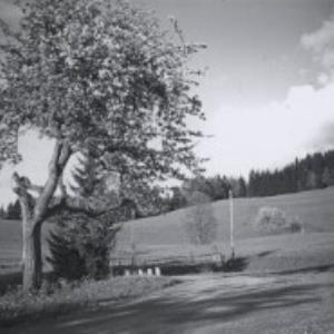 Rickatschwende / Fotograf: Norbert Bertolini von Bertolini, Norbert