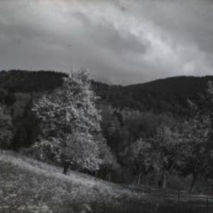 Dornbirn, Haselstauden / Fotograf: Norbert Bertolini von Bertolini, Norbert