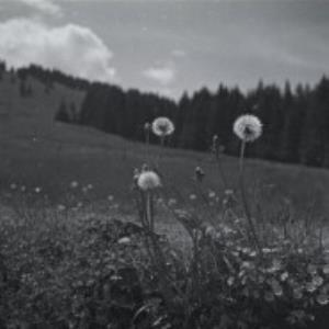 Bödele / Fotograf: Norbert Bertolini von Bertolini, Norbert