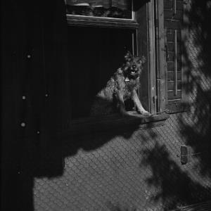 Familienhund Peter / Fotograf: Norbert Bertolini von Bertolini, Norbert