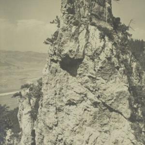 Hohenems Löwenzahn von Alpine Lichtbildnerei, Nipp J.