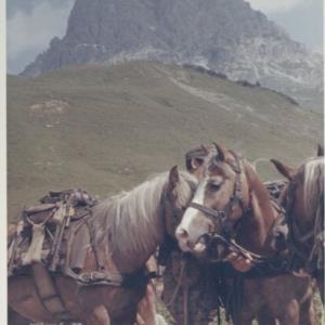 Bundesheersoldaten mit Pferden / Fotograf: Norbert Bertolini von Bertolini, Norbert