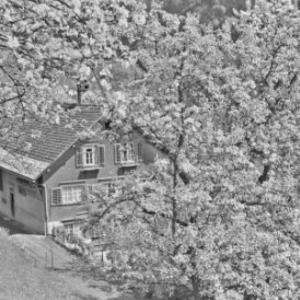 Schwarzenberg - Bödele, Bauernhaus / Franz Beer von Beer, Franz