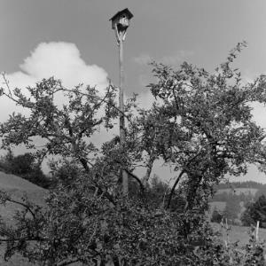 Baum mit Vogelhaus / Franz Beer von Beer, Franz