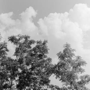 Bäume gegen den Himmel / Franz Beer von Beer, Franz