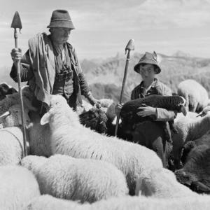 Schafe mit Hirten / Franz Beer von Beer, Franz