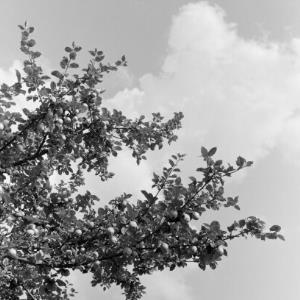 Baum gegen den Himmel / Franz Beer von Beer, Franz