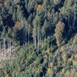 Frastanz - Wald von Amt der Vorarlberger Landesregierung Abteilung Raumplanung